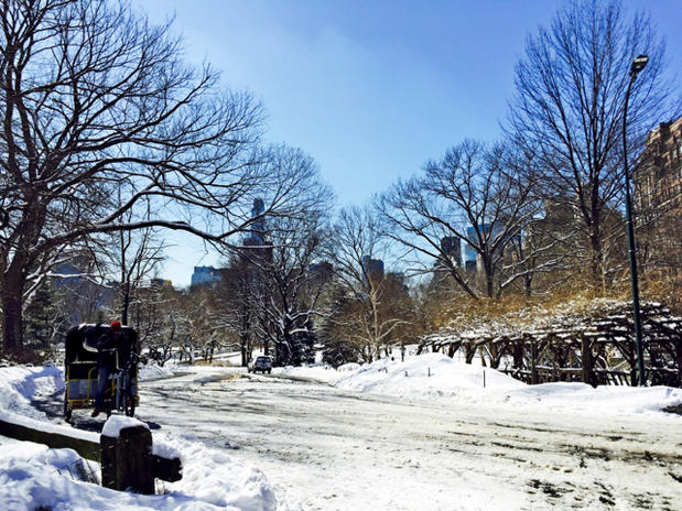 Magical Central Park in The Winter